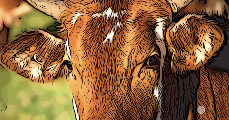 Cow header
