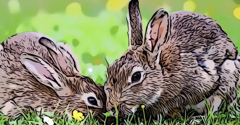 Rabbit header