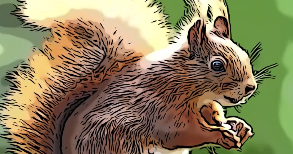 Squirrel comic