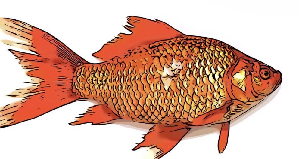 Fish comic
