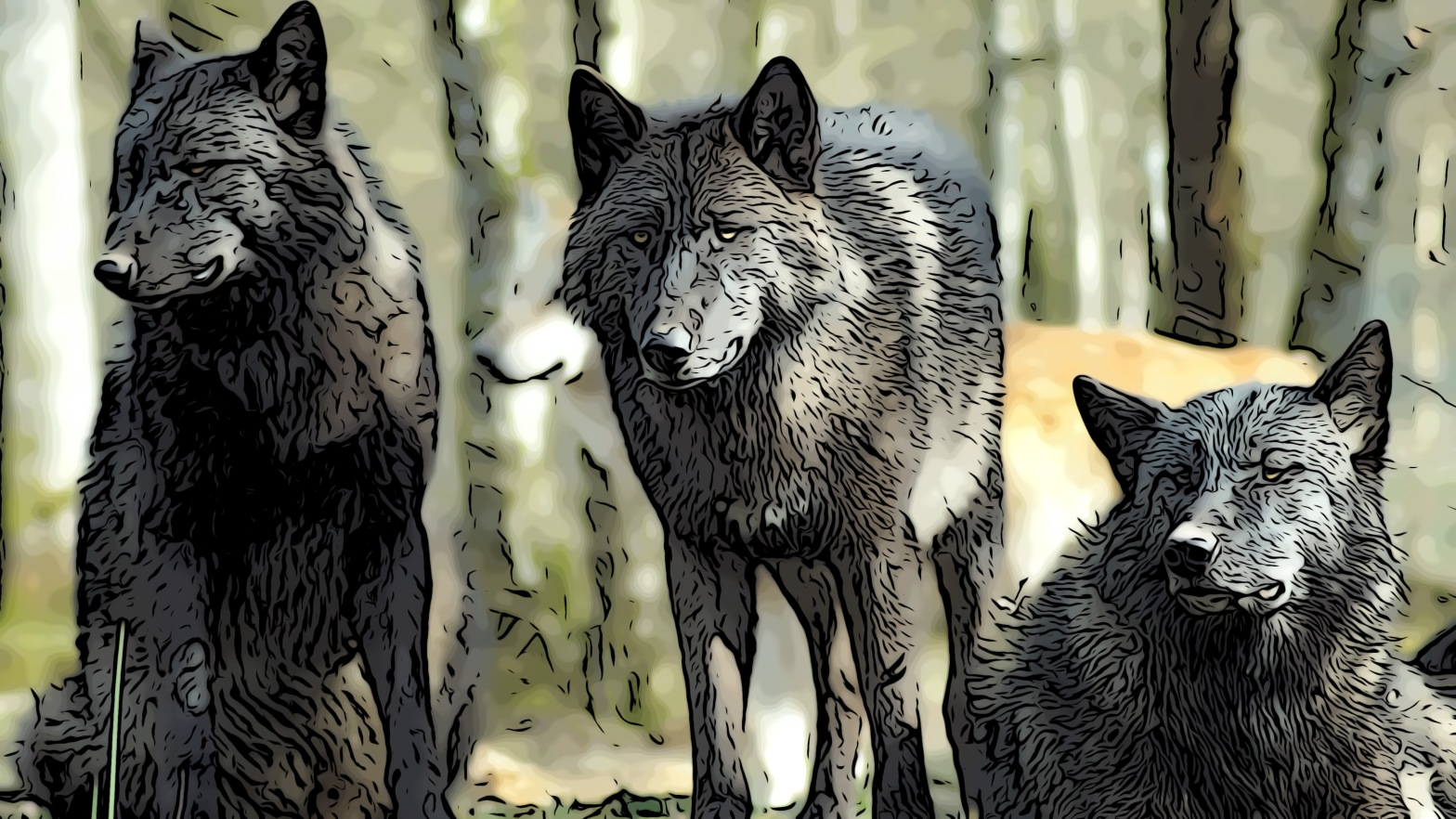 Wolves header comic