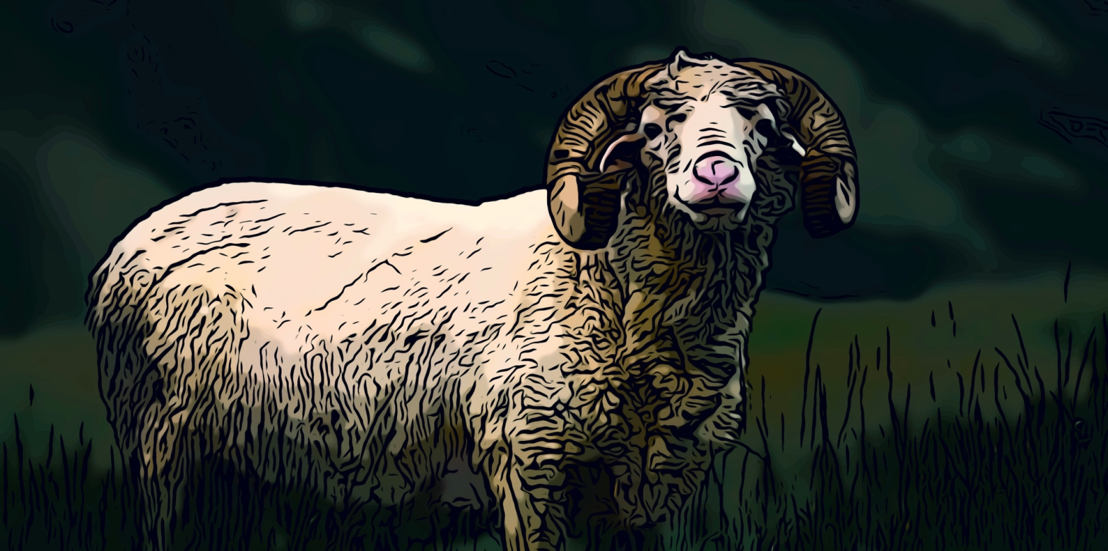 Sheep header comic