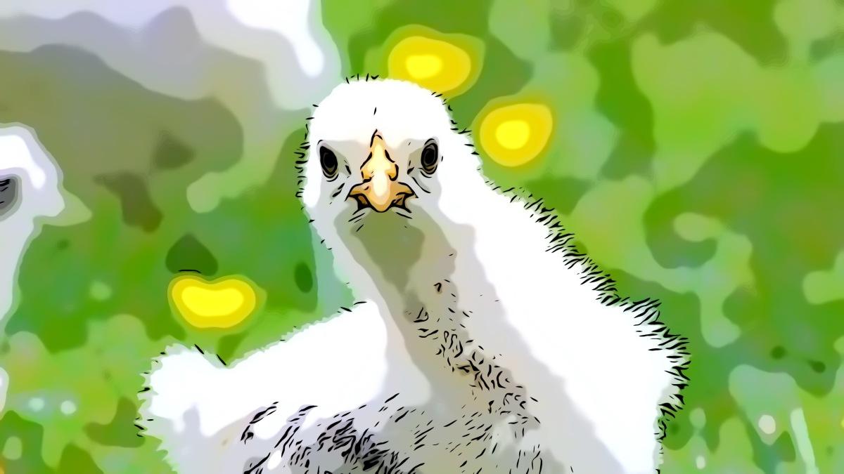 Chicken header comic