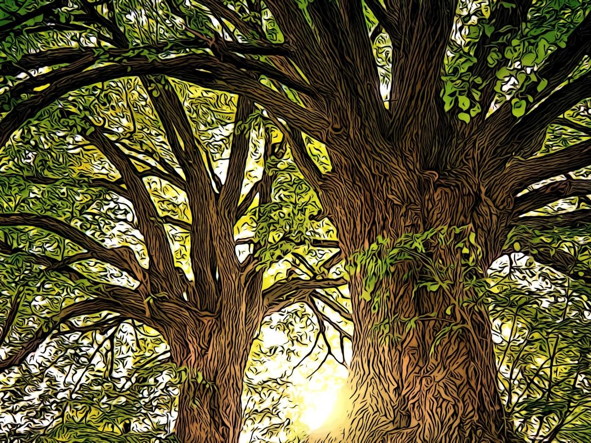 Trees header comic