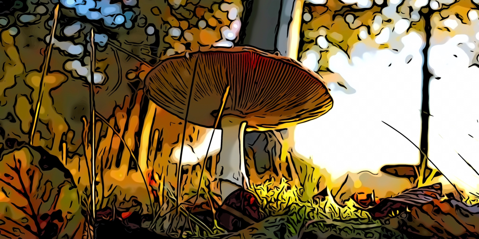 Mushroom header comic
