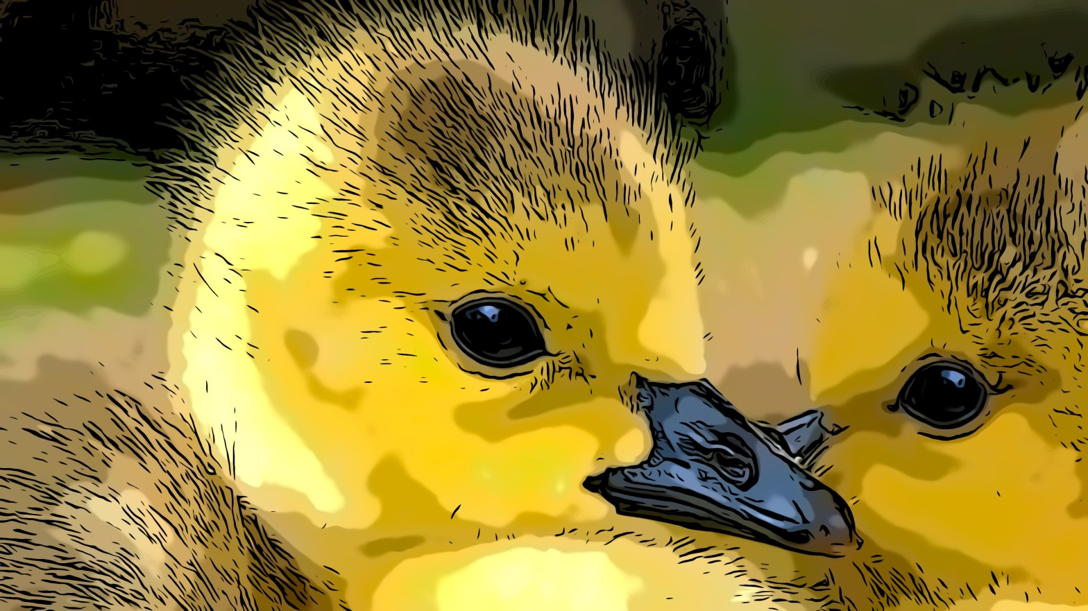 Duck header comic