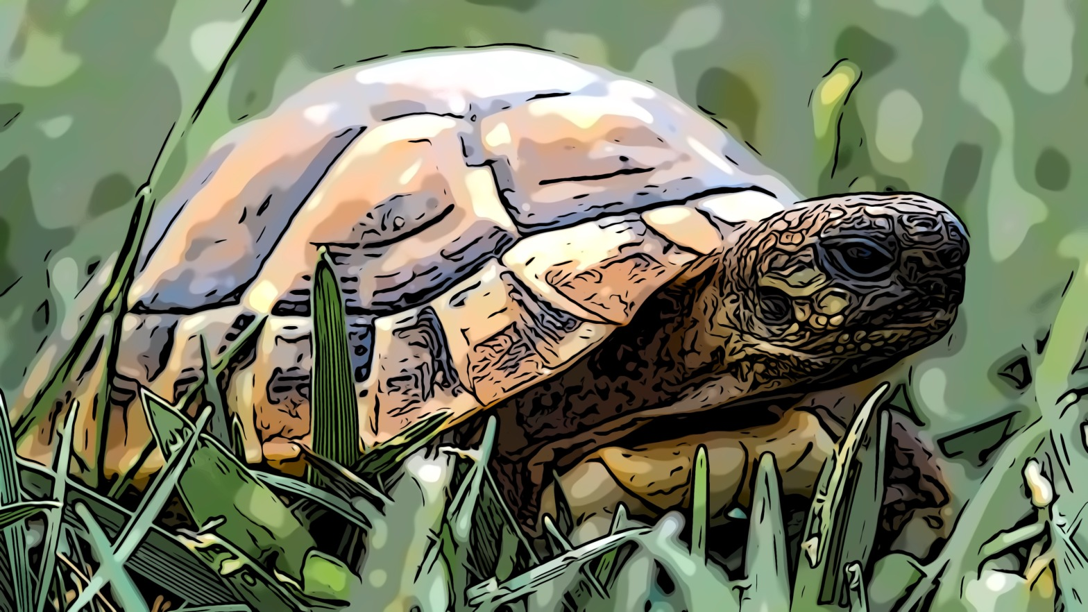 Turtle header comic