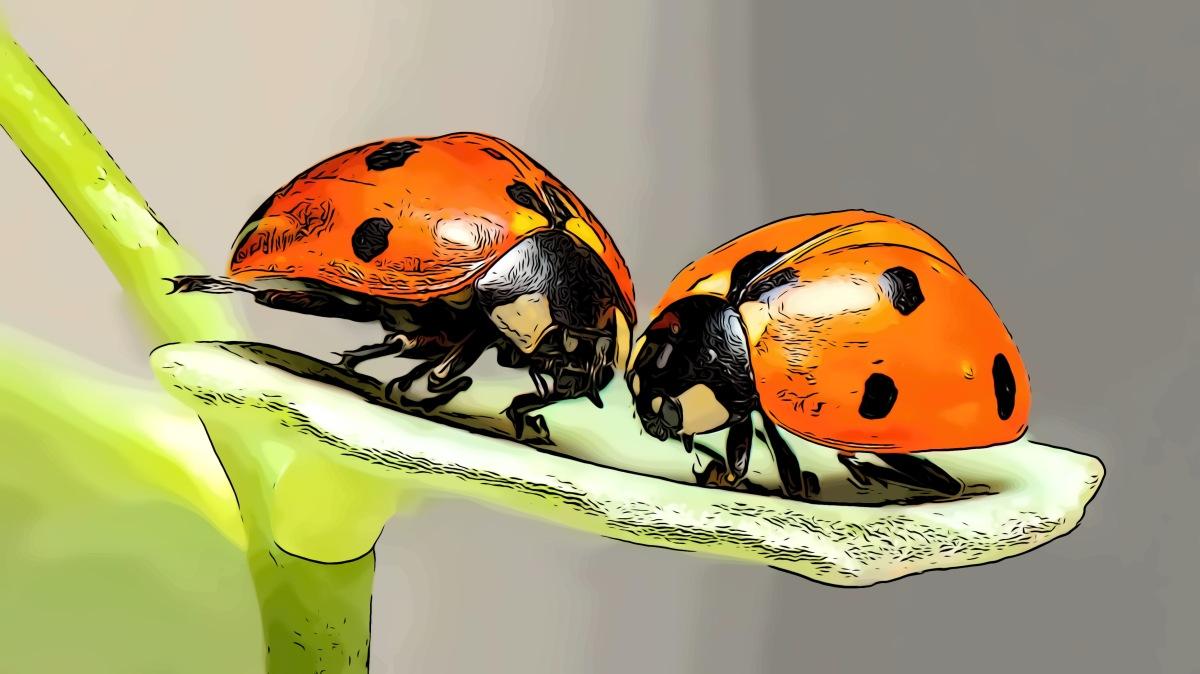 Bugs header comic