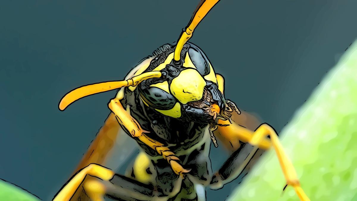 Hornet header comic