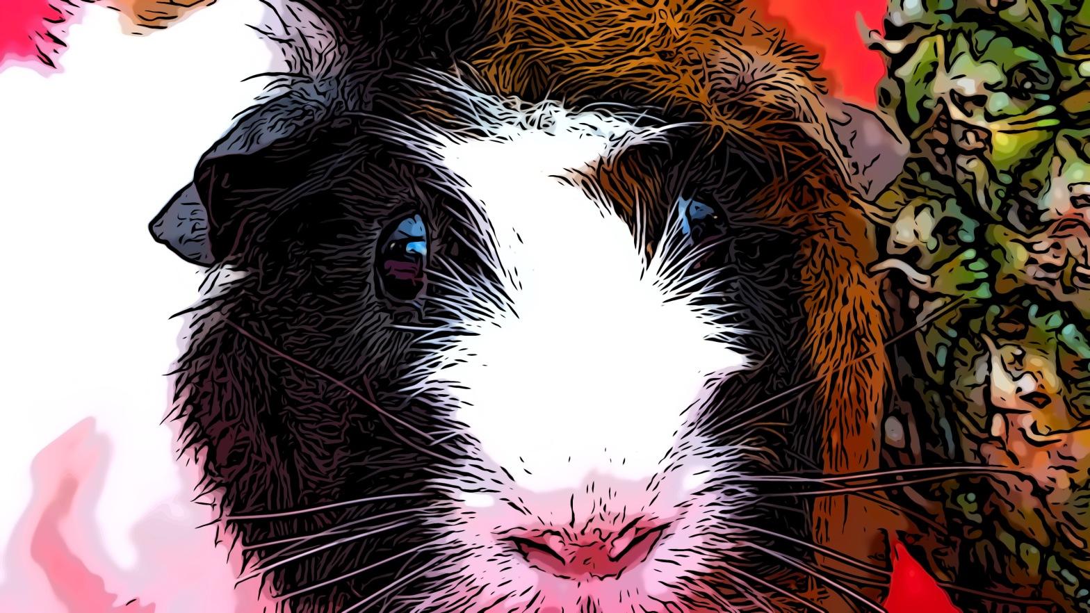 Guinea pig header comic