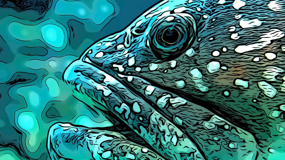 Eel header comic