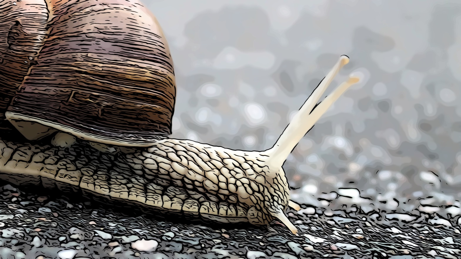 Snail header comic